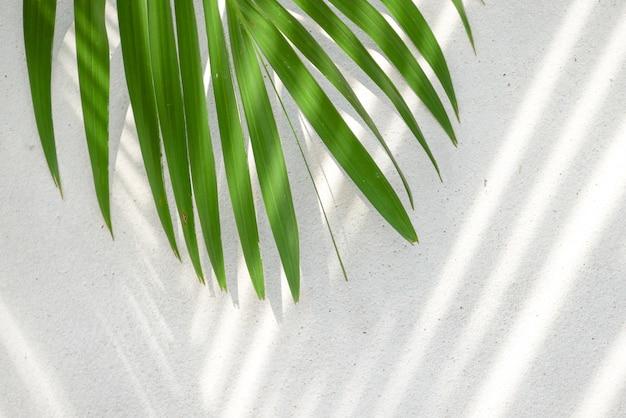 Textura de fundo com sombras folhas de palmeira em uma parede de concreto
