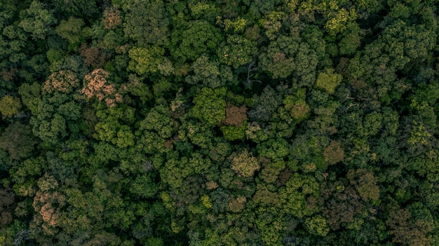 Textura de fundo da floresta