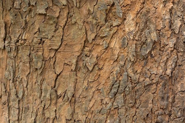 Textura de fundo de casca de árvore envelhecida, padrão de crosta de madeira suja