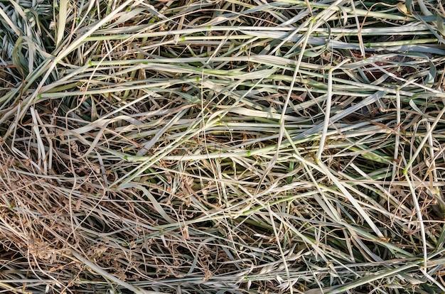 Textura de fundo de feno grama seca