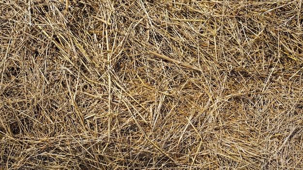 Textura de fundo de feno ou palha. padrão natural