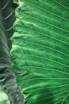 Textura de fundo de folha verde de plantas tropicais vertical