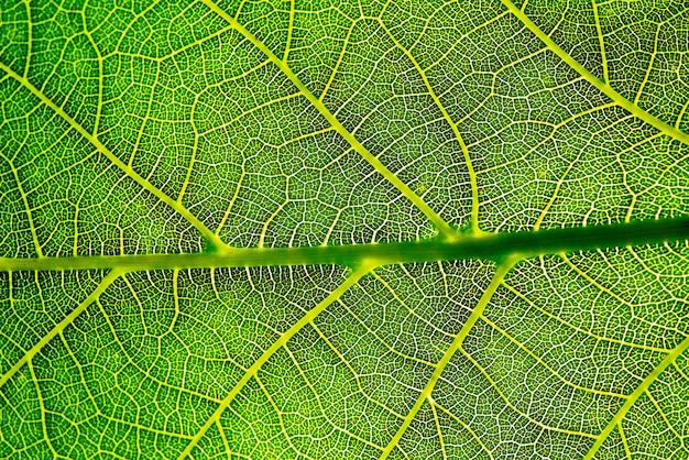Textura de fundo de folha verde.