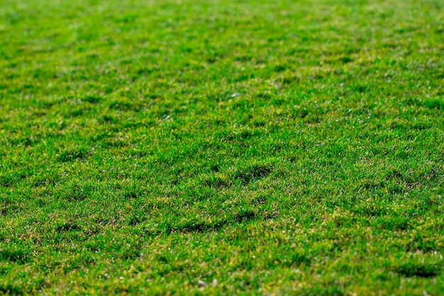 Textura de fundo de grama verde. campo de golfe ou futebol