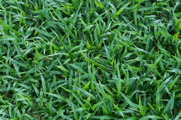 Textura de fundo de grama verde