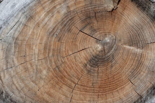 Textura de fundo de log de madeira com rachaduras e anéis de crescimento.