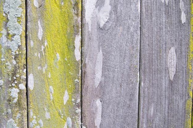 Textura de fundo de madeira velha com musgo verde
