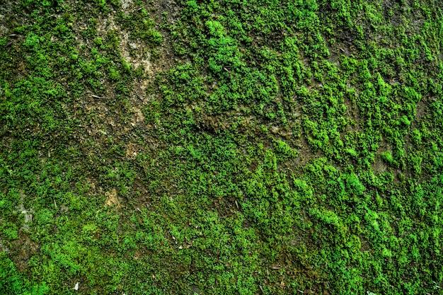 Textura de fundo de parede com musgo