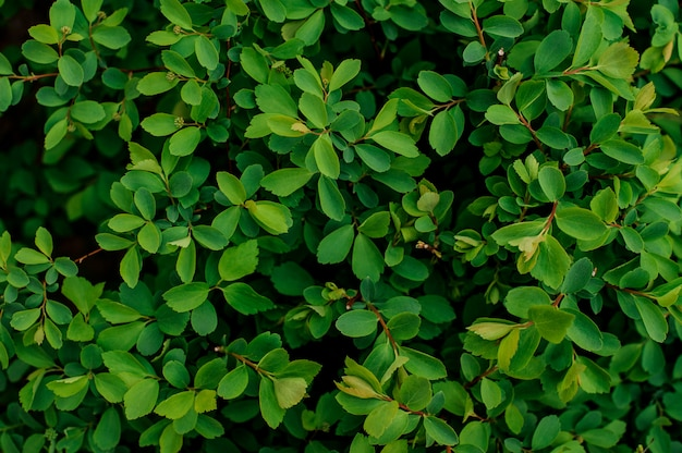 Textura de fundo de uma planta verde suculenta