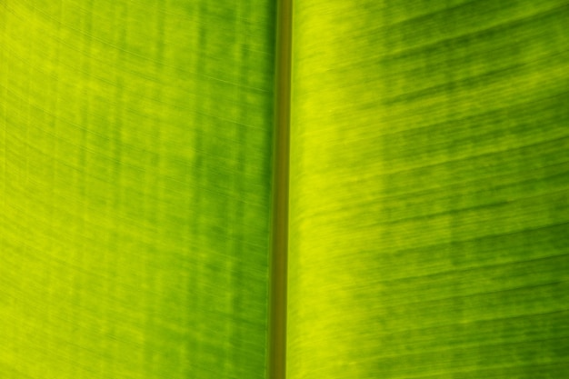 Textura de fundo em close-up extremo de folha de palmeira verde brilhante iluminada com veias