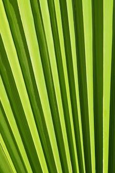 Textura de fundo em close-up extremo de nervuras e nervuras de folha de palmeira verde iluminadas