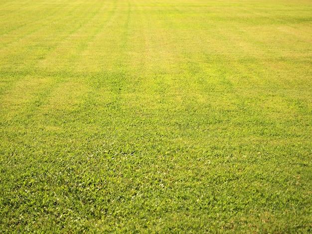 Textura de fundo sem emenda de campo de grama verde