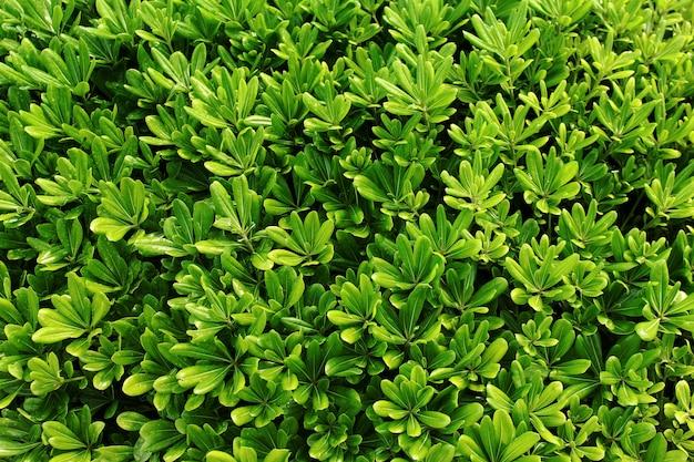 Textura de fundo verde folha