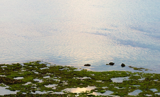 Textura de fundo verde musgo linda na natureza