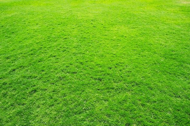 Textura de grama de um campo