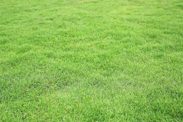 Textura de grama verde como pano de fundo