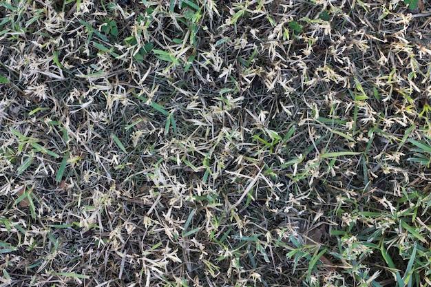Textura de grama verde, gramado verde