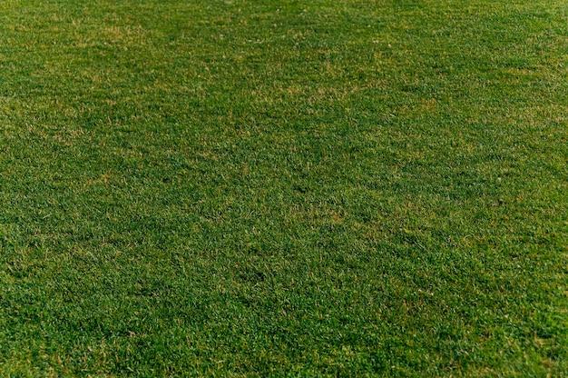 Textura de grama verde para plano de fundo. conceito sobre o tema da ecologia.