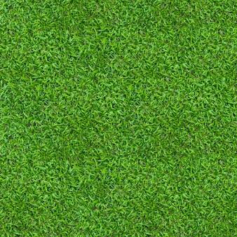 Textura de grama verde para plano de fundo