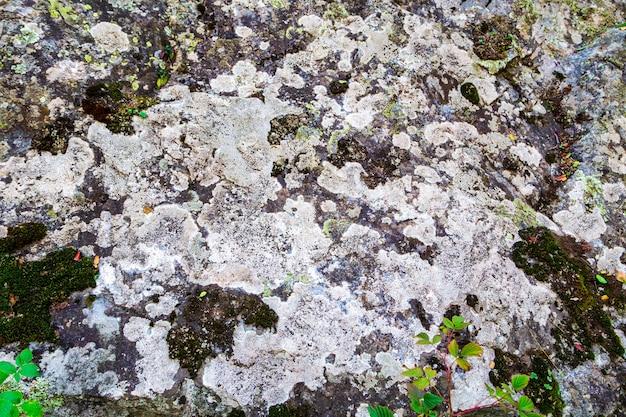 Textura de líquen e musgo em pedras