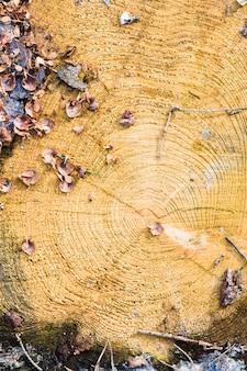 Textura de madeira com anéis de árvores