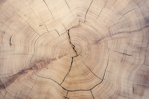 Textura de madeira cortada velha