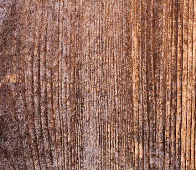 Textura de madeira de casca com antigo padrão natural