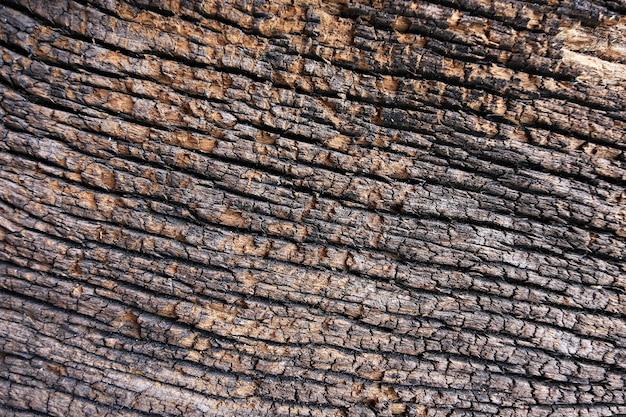 Textura de madeira de casca de árvore usada como fundo natural