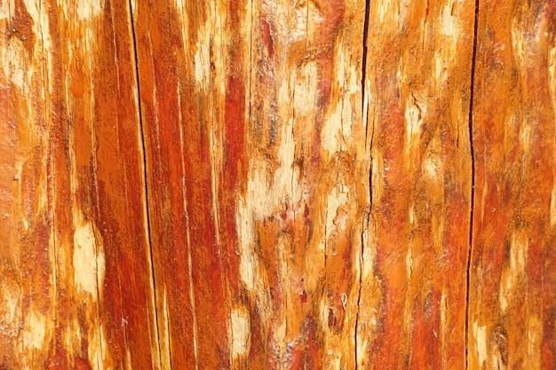 Textura de madeira de casca usar como fundo natural