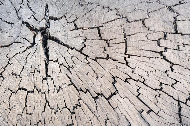 Textura de madeira de lariço de tronco de árvore cortado, close-up. toco de madeira.
