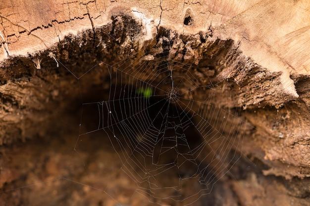 Textura de madeira e fundo. velha árvore dentro.