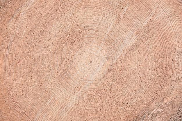 Textura de madeira, estrutura de árvore