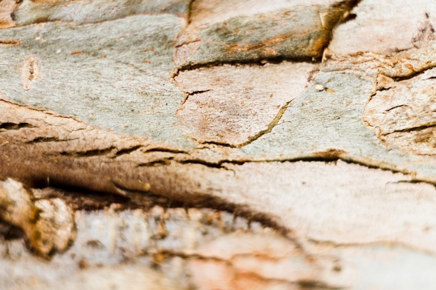 Textura de madeira natural à luz