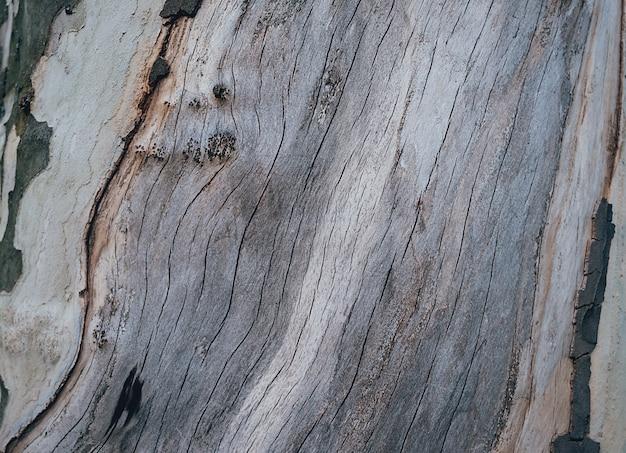 Textura de madeira velha árvore.