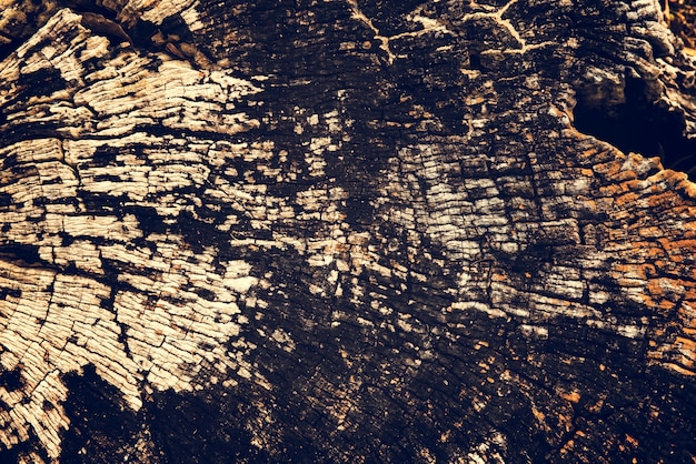 Textura de madeira velha de madeira de coto rachado