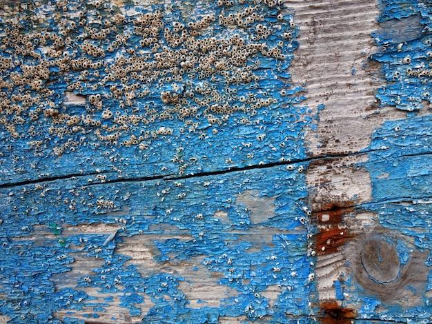 Textura de madeira velha pintada azul desgastado pelo efeito do mar e do sal.