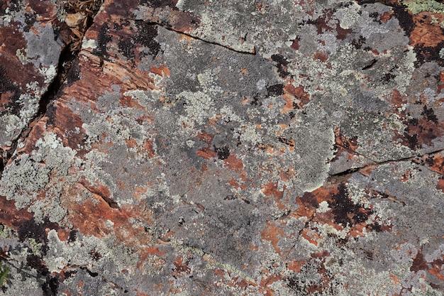 Textura de musgo de pedra de rocha