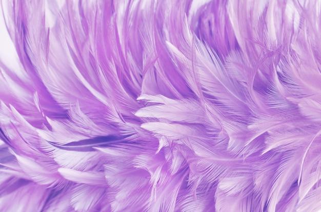 Textura de padrão de asa de pena roxa clara para e projeto de obra de arte.