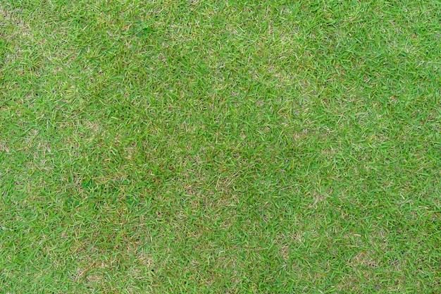 Textura de padrão de grama para segundo plano. gramado verde exuberante. fechar-se.