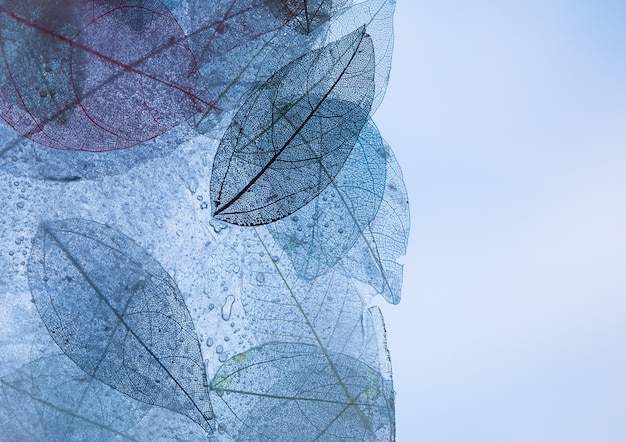 Textura de pano de fundo transparente com folhas florais coloridas e azuis