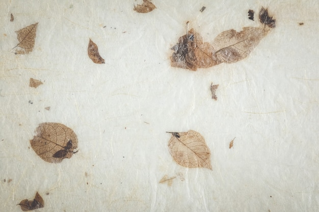 Textura de papel de folhas secas naturais. papel feito à mão.