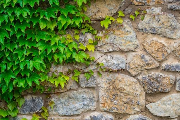 Textura de parede de folhas verdes.