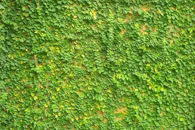 Textura de parede de plantas verdes