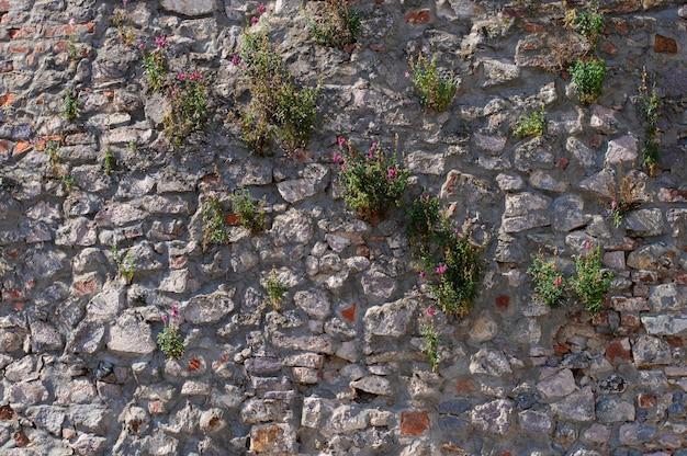 Textura de parede vintage com flores