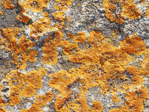 Textura de pedra com musgo