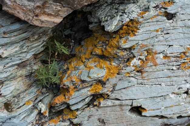 Textura de pedra da rocha