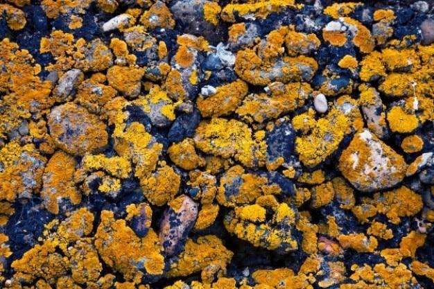 Textura de pedra mofado