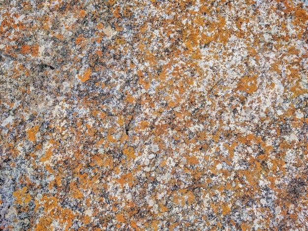 Textura de pedra sem costura com fragmentos de rochas e fungos.