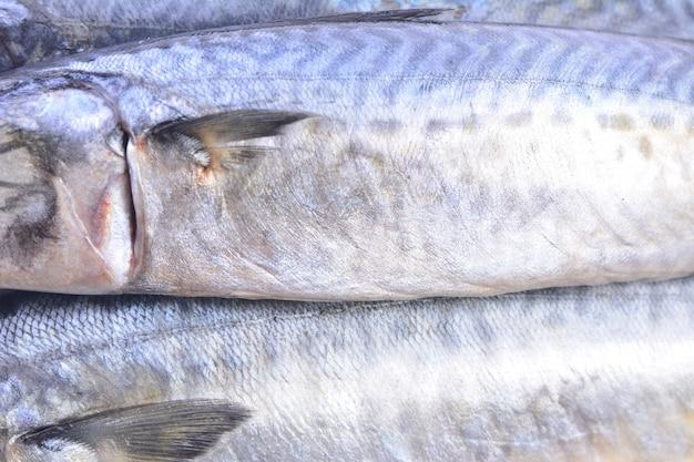 Textura de peixe cavala