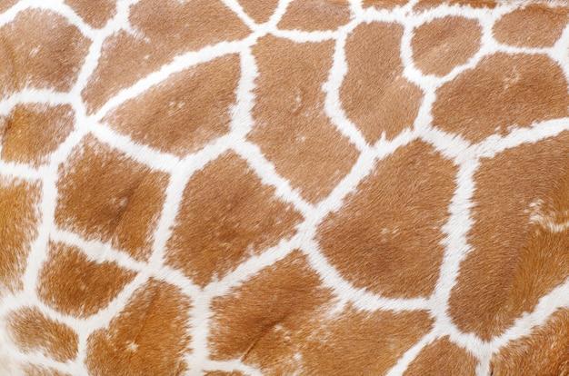 Textura de pele de animal de girafa para o seu plano de fundo e padrão